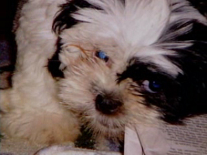 patches - do not buy from pet farms
