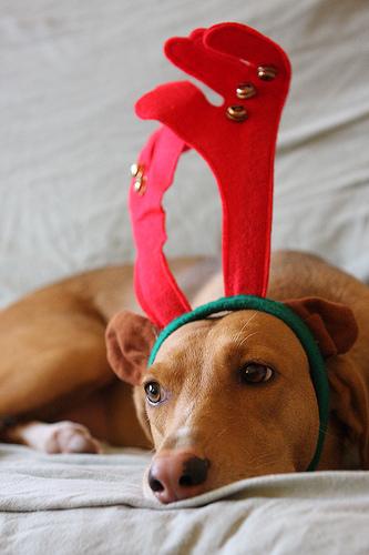 No I dont like christmas - Doggie says no I dont like christmas.