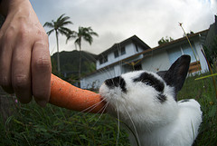 carrots............... - eat carrots.................