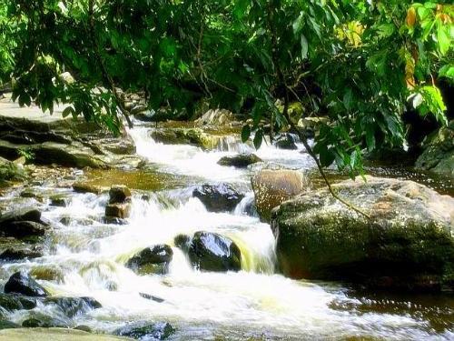 Waterfall  - Waterfall surrounding by trees