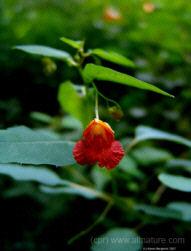herbal medicine -  herbal medicines