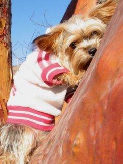 Unacceptable Dog Behaviour - So Cute yet So Bad