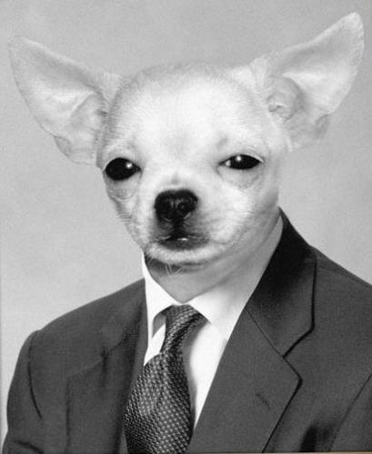 Political Animal - Coochie coochi coo!