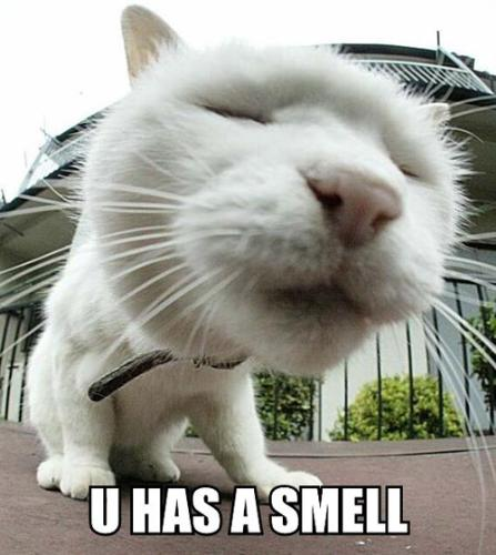 Cat is smelling you - Cats can smell more things than people, they noses are they guides.