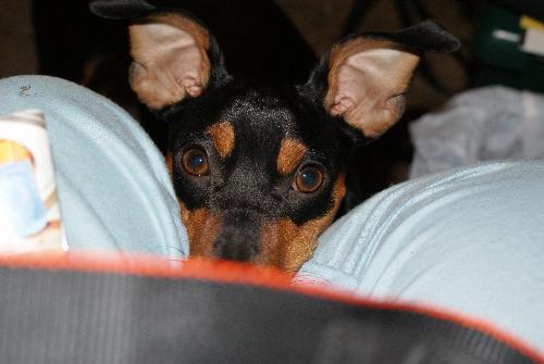 ozzie - my little boy