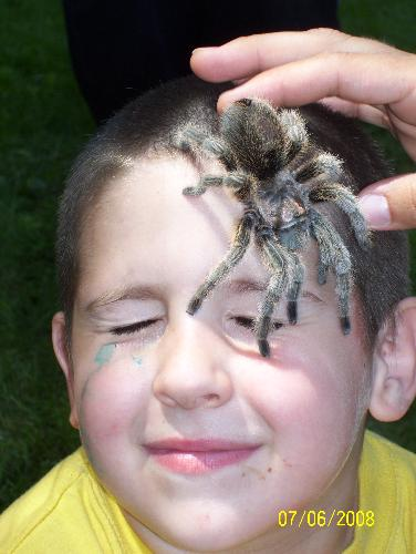 He IS SO BRAVE - This is my son at his 6th b-day party with a taranculla on his face, i have a phobia of spiders and could never do this, not even if i didnt. This picture creeps me out, but look hes smiling he thinks it's so cool lol.