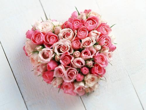 Valentine Flower - Pinky Valentine Flower