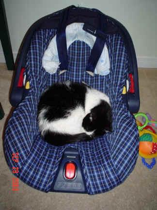 Cat sleeping - Cat Sleeping in Car seat