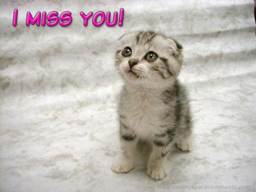 MissingKitty - I miss many person around me. i m not having special relationship with them but still miss them