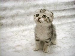 LOVELY CAT - THIS CAT IS SOO.. CUTE!!