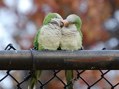 different languages of love - Love Is In The Air Even Parrots Can Tell...