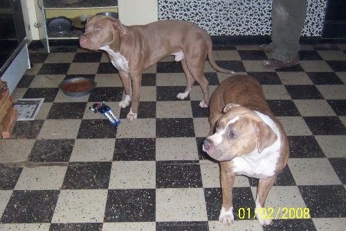 Kane and Nika - Kane and Kina just hangin in the kitchen