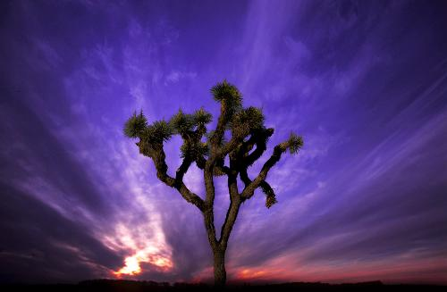 Joshua Tree National Park - I took this with a Sony Alpha 100!