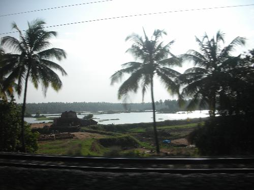 Like this photo? Its from Kerala. This is picture  - Like this photo? Its from Kerala. This is picture from my kerala tour.