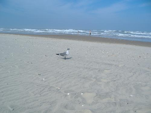 Ocean - Picture of the ocean with a seagull