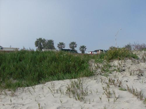 sand dunes - Picture of some sand dunes