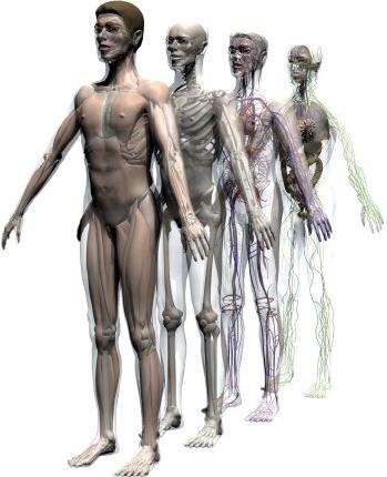 human body. myLot - Human Body