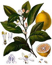 gooseberry - rich source of vit c