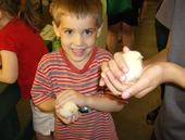My son with a chick - My son holding a baby chick