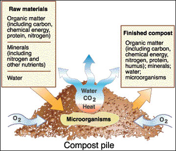 Compost Diagram - Here is a diagram of the cycle of a compost pile
