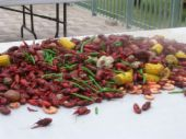 Crawfish - crawfish