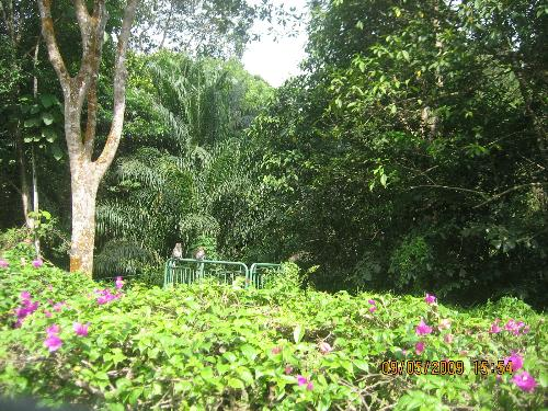 nature  - this is a picture of the nature park in Singapore
