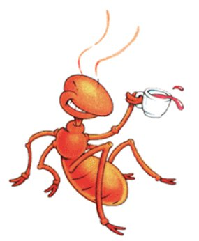 Ants - Ants, bugs, infectation