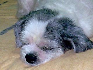 sleeping - shhh... my dog is sleeping