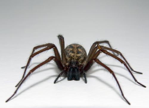 Spider - My eardrum.