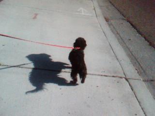 Marley walking  - Enjoying life by taking a walk with my dog.