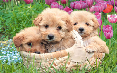 friends - there are three puppies friends who are lookig so cute in the photo.they are very addorable . as all of the world like puppies very much . these puppies are like angel from haeven an dthey are very much cute in the whole heaven. i like puppies very much.