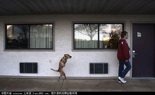 2 Legged Dog!! - How can this even be possible!!!