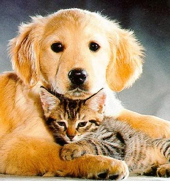 cats and dogs - picture of cats and dogs