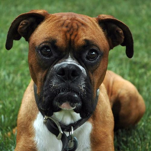 صور كلاب منوعة - صور كلاب صغيره