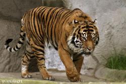 sukesh - my photo