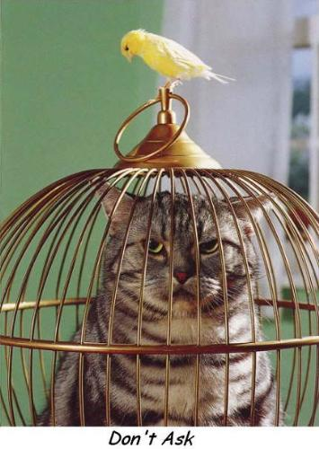 Cat In Cage. Tags: canary and cat in cage
