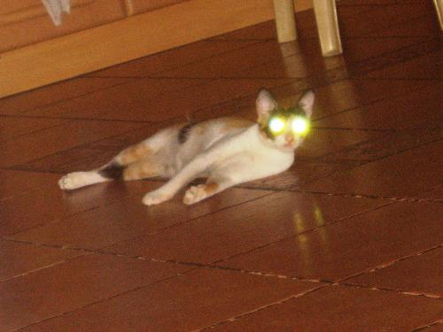 Cat - Cyclops.. The X-Pet we have at home. :p