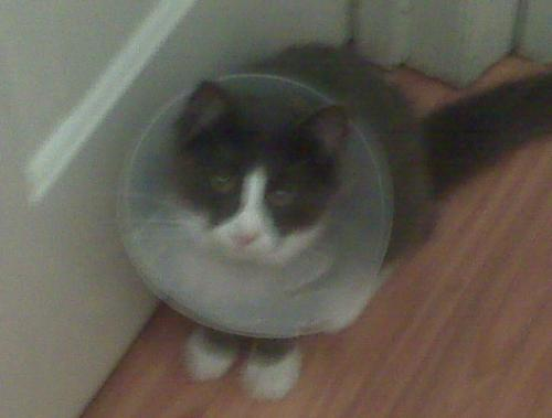 my poor kitten aiden - aiden with his collar after his infection from surgery