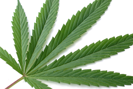 marijuana - healthy marijuana. :)