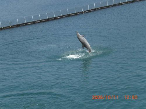 dolphin walking on water - how do they do this? their tails are so strong it can hold them up for a little bit of time.