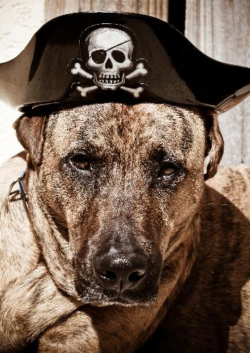 my boy saber - my dogs a pirate!