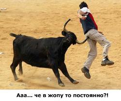 bull - angry bull