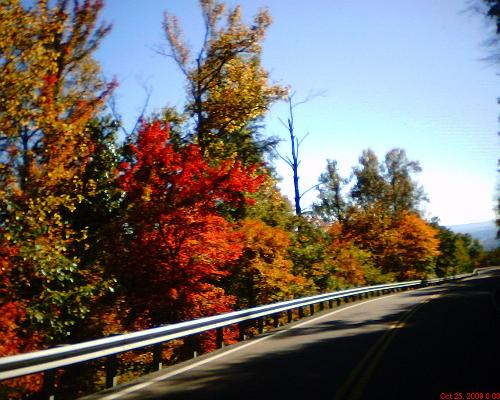 fall colors - This was taken as I was driving down Tracy mountain. I think this one picked up the brightest colors of the pictures I took that day. By the way I was traveling about 40 mph when I snapped that shot through my windshield.