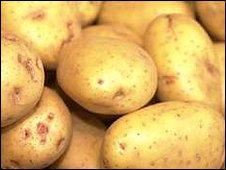 fresh potatoes - potato! potato! and lots of potato