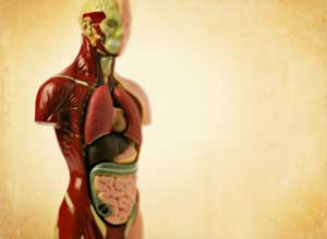 body donation - Donate your body after death.