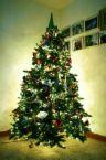 christmas tree - Isn't that pretty?
