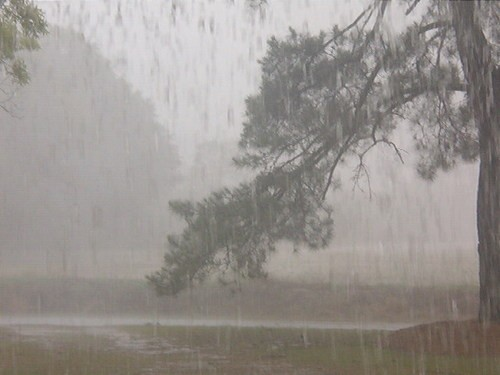 Heavy rainfall - Heavy rainfall in a tropical forest opened as a park for civillians.