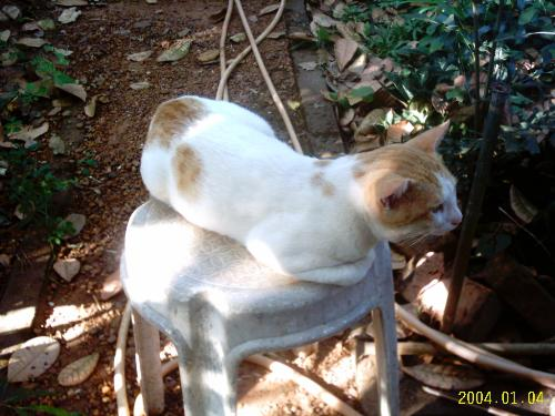 One of my cats that never returned. - Tom cats have this habit of leaving their home.