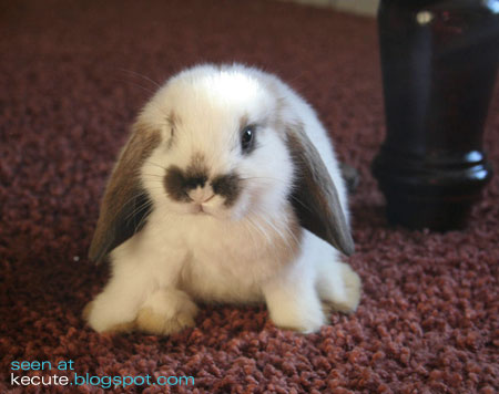 cute pictures of bunnies. A cute rabbit on the carpet