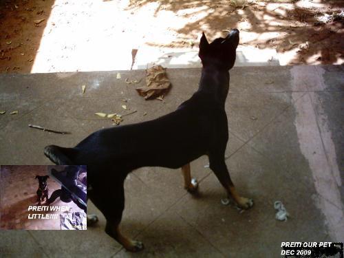 My pet dog - Preiti my pet dog lives in the lap of luxury.